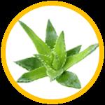 Aloes, GardVit spray na suchość w gardle